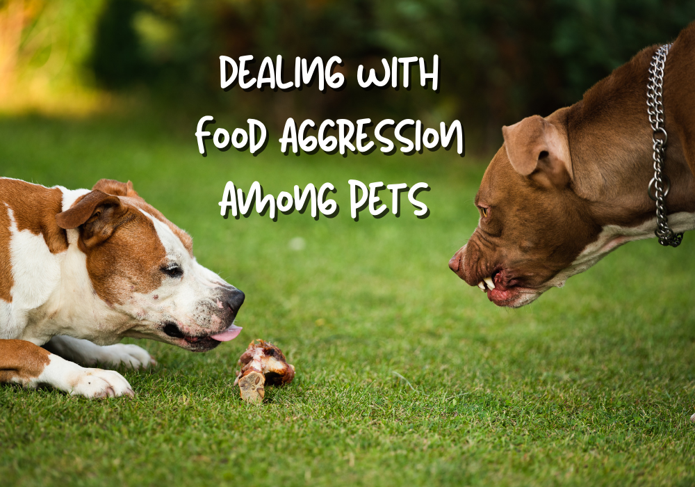 Dealing with Food Aggression Among Pets