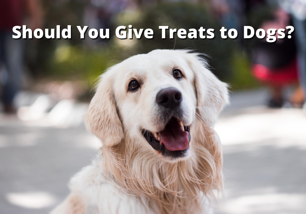 Should You Give Treats to Dogs